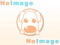 仔犬No:1/チワワの男の子