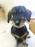 仔犬NO:4ミニチュアダックスフンド